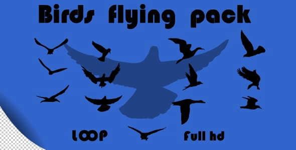 birds-flying-pack