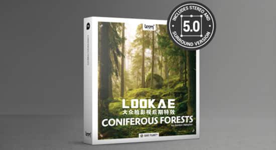 181组针叶林森林虫鸣鸟叫大自然环境环绕立体声无损音效 Coniferous Forests